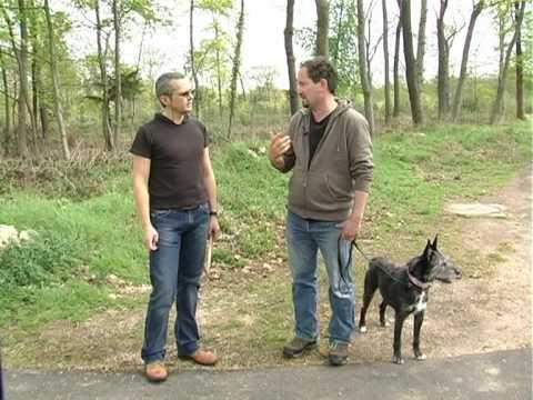 Jouets pour Chien : Comment Occuper un chien?