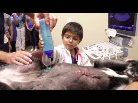 Nominee's Wish To Be A Veterinarian