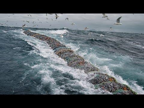 Big Catch Fishing in The Deep Sea With Big Boat - Amazing Modern Fish Processing Line - Thời lượng: 11 phút.