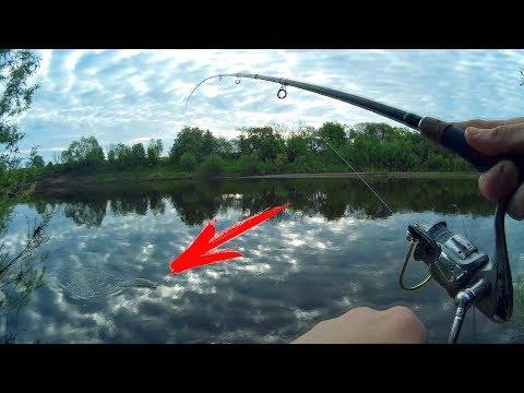 какую рыбу ловят на донную снасть