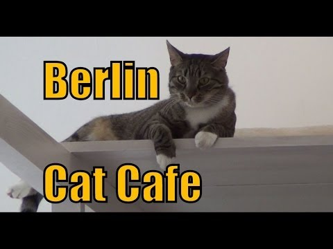 Pee Pees Katzencafé cat cafe in Berlin, Germany