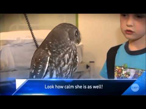 Calm Owl. Still can't get over this video.