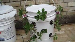 Off Grid Self Watering Container Gardening System The Ultimate Container Vidinfo