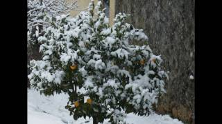 Meda Portugal  city photos : Longroiva Meda Guarda Portugal Neve Video Movie Amazing Snow in Longroiva.wmv