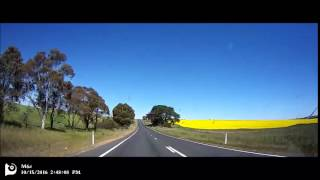 Cowra Australia  City pictures : Enjoy cole flowers on the road near cowra, Australia