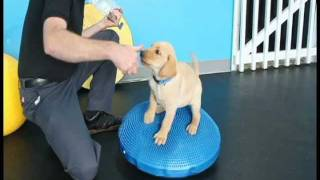 Puppy Proprioception Class With Flash