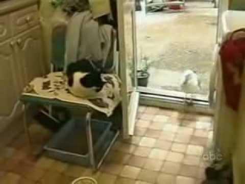 Sirály és a cica esete