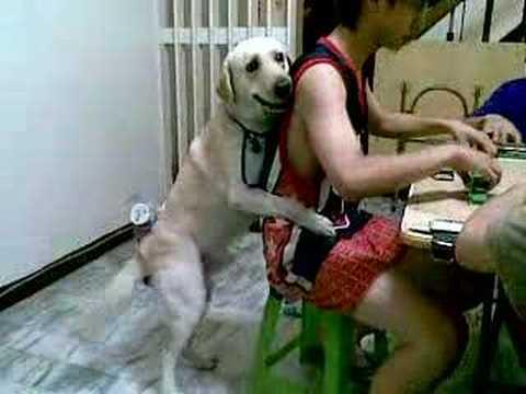 主人在打麻將賺錢,狗狗在後面發春,一直騎著主人扭著腰….