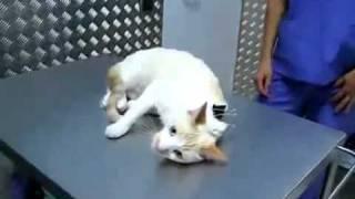Inmovilizar a un gato