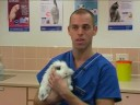 Watch the Rabbit Responsibility Video