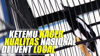 Video Bertemu Kacer Kualitas Nasional di Event Lokal MP3, 3GP, MP4, WEBM, AVI, FLV Juni 2019