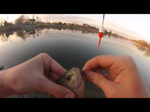 Fishing For Nice Small BlueGill