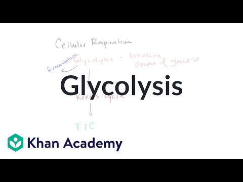 Bioenergetics: Glycolysis | Cellular respiration | Khan Academy