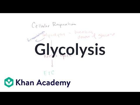 Bioenergetics: Glycolysis | Cellular respiration | Khan Academy