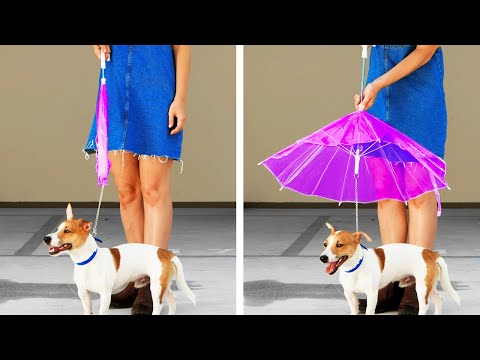 27 Incredible Ideas For Your Pets