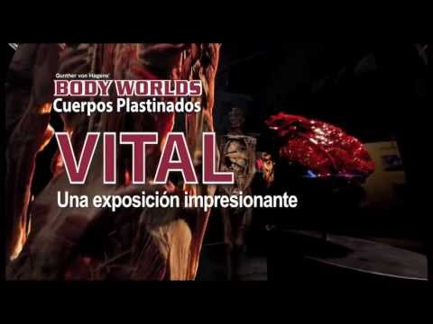Spot Body Worlds julio 2013