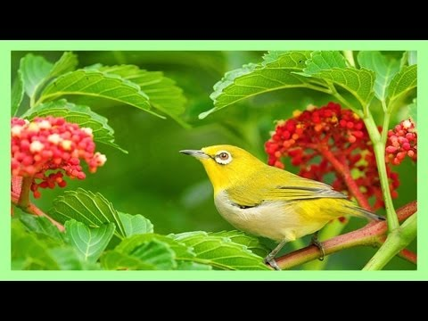 birds - This is a compilation of birds' singing in the forest - fills you with warmth, peace and energy for the day ahead.