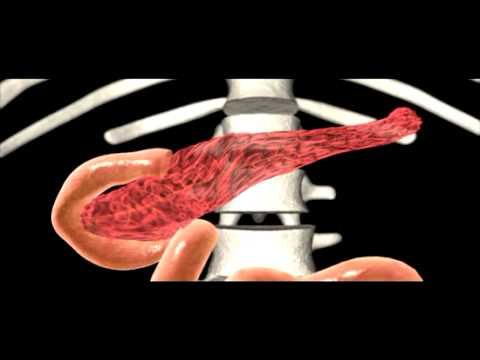 ovaries - To purchase this program please visit http://www.greatpacificmedia.com/ Segment from the program The Endocrine System: Molecular Messengers, Chemical Control...