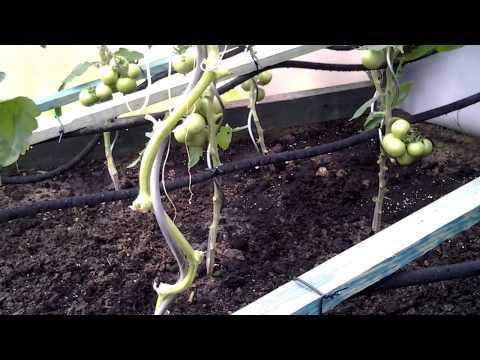 det2013 Garten Gewächshaus Bewässerung mit Perlschlauch System funktioniert
