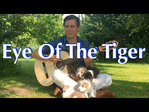 Eye Of The Tiger (Survivor) Acoustic – Classical Fingerstyle Guitar by Thomas Zwijsen