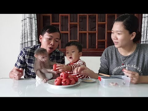 Baby Monkey  Doo Eats Rose Apple With Family -  Funny Animals