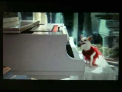 Chloe play piano (Beverly Hills Chihuahua 3)