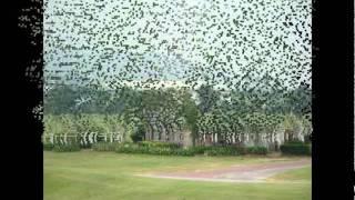 Pattana Golf&Sports Resort (Pattaya Thailand)_2