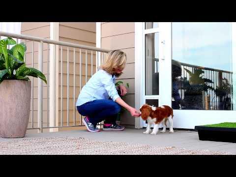 Enjoy The Convenience Of A Pet Door