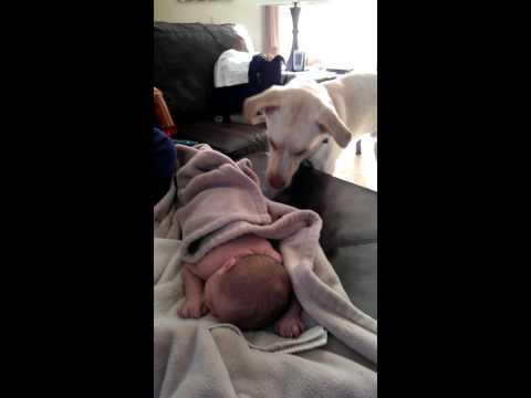 Dog covers sleeping baby up