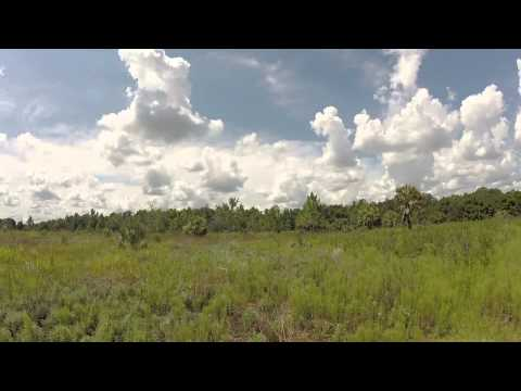 Skunk Ape Sighting In Plant City June 2015