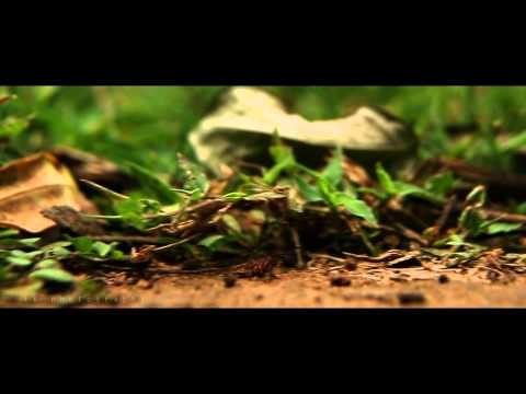 LK Cinematography showreel short film
