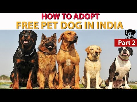 Free Pet Dog Adoption In India L Puppies For Adoption In India L Online Dog Adoption L Free Of Cost