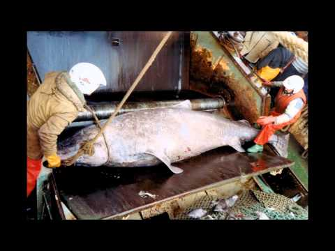 Grand Banks Distant-Water Fishing Fleet (North Atlantic)/Pesca en Terranova (El Gran Banco)