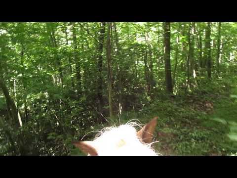 Horseback riding in Appalachian Mountains