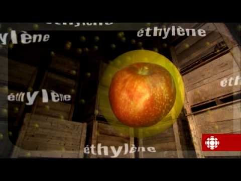 L'épicerie - Les pommes du Québec