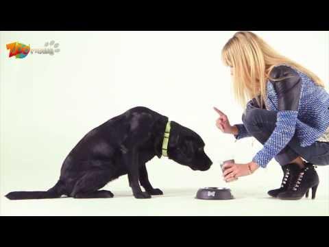 Nourriture pour chien : Comment Comprendre les étiquettes des conserves pour chien