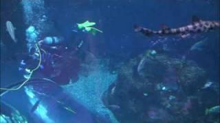 Aquarium of Quebec