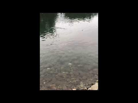 ловля на реке бзыбь