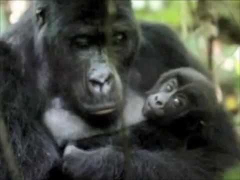 l'amore di una mamma