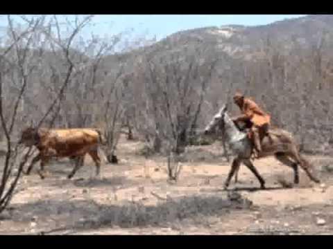 matérias sobre a noite dos vaqueiros em Altos/PI