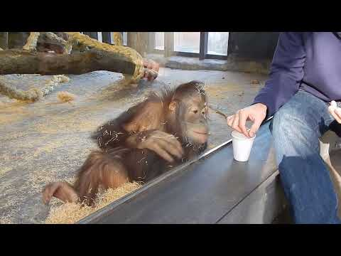 Monkey Reacts To Magic Trick