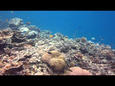 Dive Pari Island [HD] - November 2013