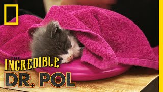 Helping a Sick Kitten | The Incredible Dr. Pol by Nat Geo WILD