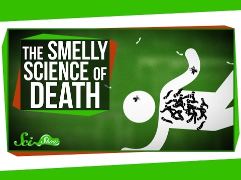 The Strange Smelly Science of Decomposing Bodies