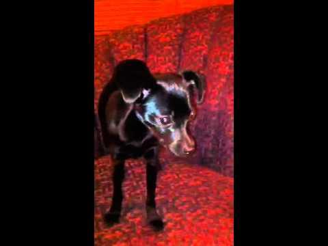Olive: World's Cutest Dog?