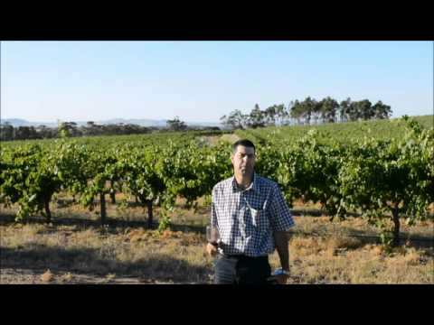 Elderton Wines Greenock one Shiraz tasting note