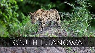 South Luangwa National Pa Zambia  city photo : South Luangwa National Park - Zambia
