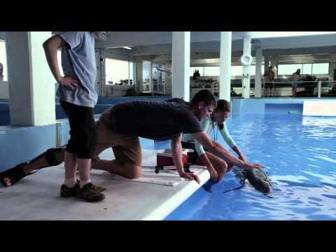 Dolphin Tale (Featurette)
