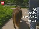 A legkisebb ló