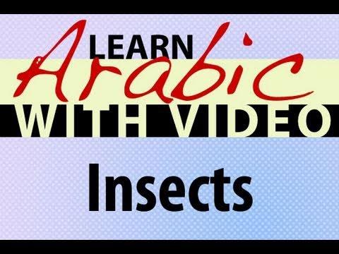 Insekten - Arabische Vokabeln